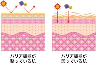 バリア機能が整っている肌 バリア機能が弱っている肌