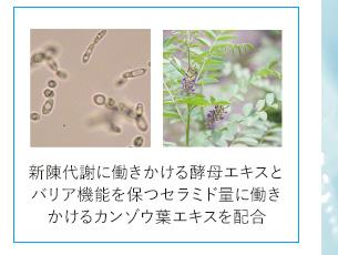 新陳代謝に働きかける酵母エキスとバリア機能を保つセラミド量に働きかけるカンゾウ葉エキスを配合